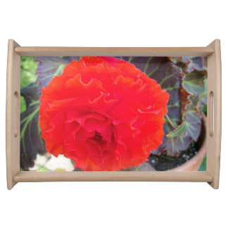 Small serving tray with red begonia.