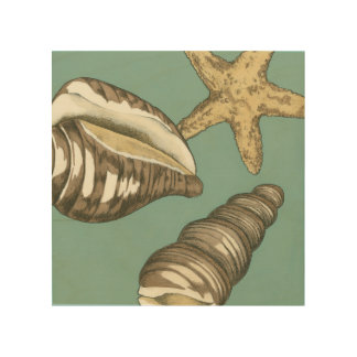 Small Shell Trio on Teal Wood Wall Art
