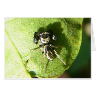 Small Spider Greeting Card