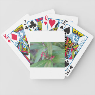 Small Spring Blooms Bicycle Playing Cards