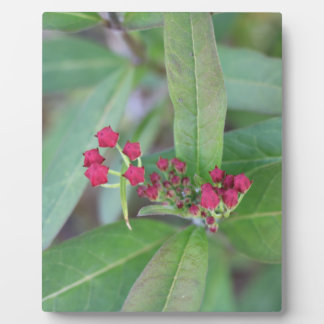 Small Spring Blooms Plaque