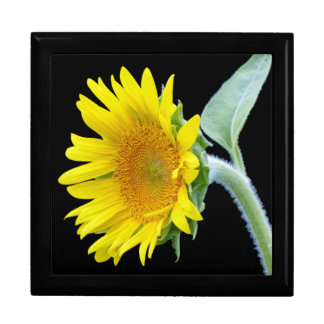 Small Sunflower Large Square Gift Box