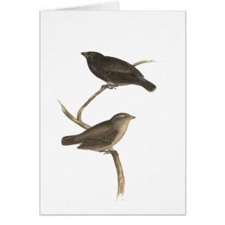 Small Tree Finch Card