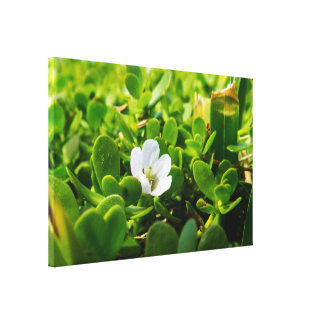 Small White Flower Canvas Print