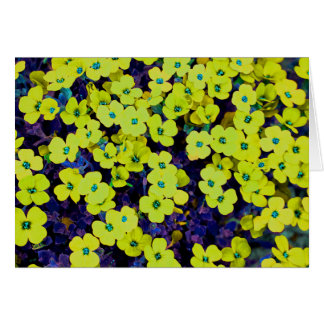 Small Yellow Flowers Card