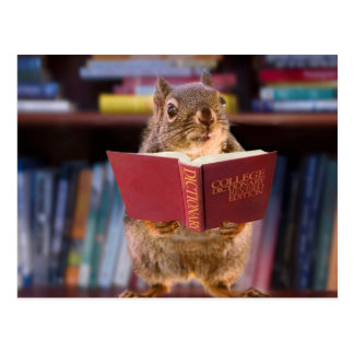 Smart Squirrel Reading a Dictionary Postcard