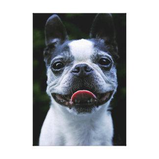 Smile! Boston Terrier Gallery Wrap Canvas