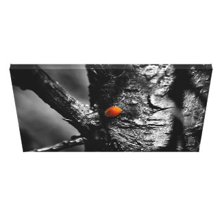 smile for a ladybug gallery wrap canvas