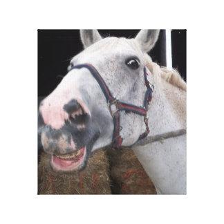 Smile Horse - Wrappet canvas Canvas Print
