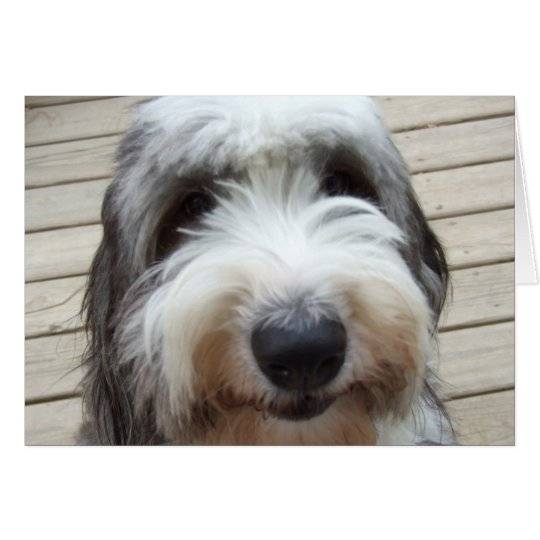 Smile Old English Sheepdog Card