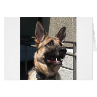 Smiley Shep Greeting Cards