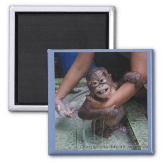 Smiling Animals Orangutan Baby Magnet