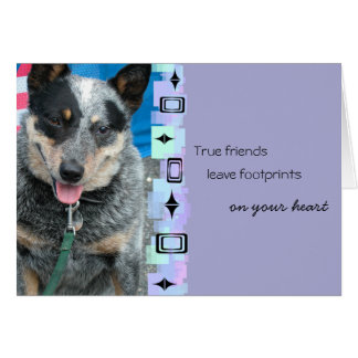 Smiling Australian Cattle Dog Birthday Greeting Card