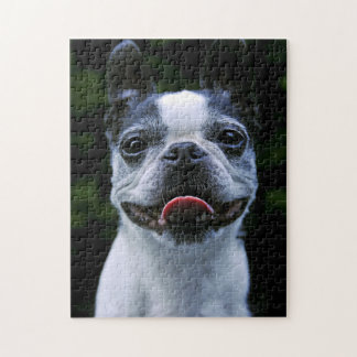 Smiling Boston Terrier Jigsaw Puzzle
