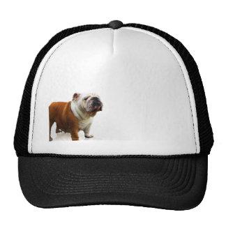Smiling Bulldog Trucker Hats