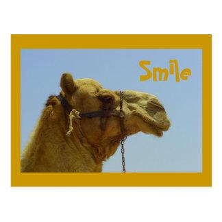 Smiling camel in profile postcard