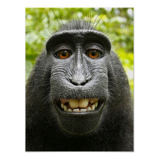 Smiling Crested Macaque Poster