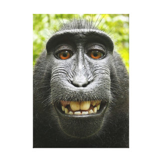 Smiling Crested Macaque Stretched Canvas Prints