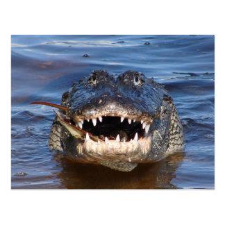 Smiling Crocodile Postcard
