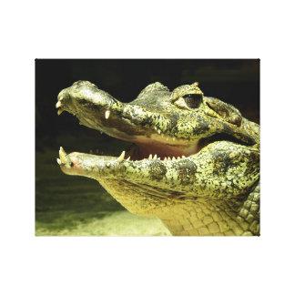 Smiling crocodile. /Smiling crocodile. Stretched Canvas Print