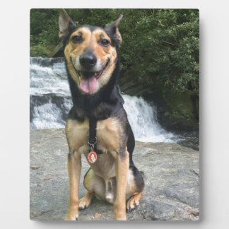 Smiling Dog on Rock Display Plaques