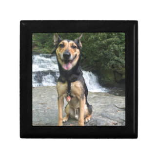 Smiling Dog on Rock Gift Box