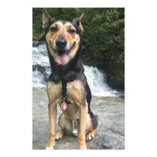 Smiling Dog on Rock Stationery