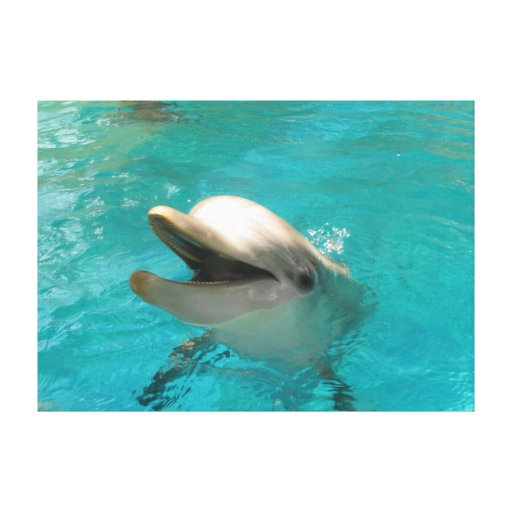 Smiling Dolphin Gallery Wrap Canvas