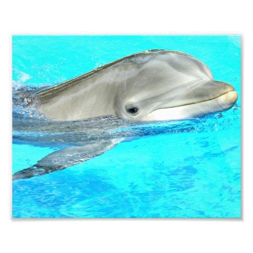 Smiling Dolphin Photo Art
