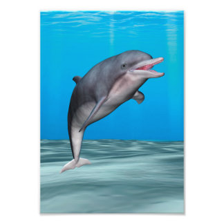 Smiling Dolphin Photographic Print