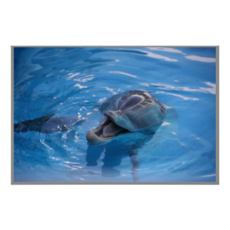 Smiling Dolphin Poster