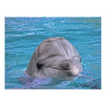 Smiling Dolphin Posters