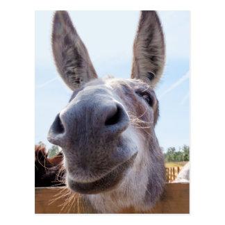 Smiling Donkey Postcard