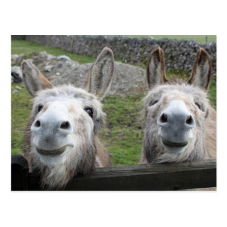 Smiling Donkeys! Postcard