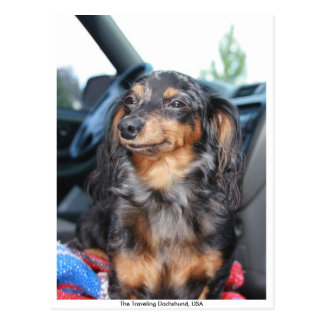smiling doxie, The Traveling Dachshund, USA Postcard