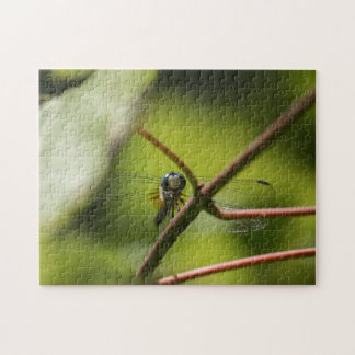 Smiling Dragonfly Jigsaw Puzzle