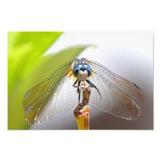 Smiling Dragonfly Macro Photo