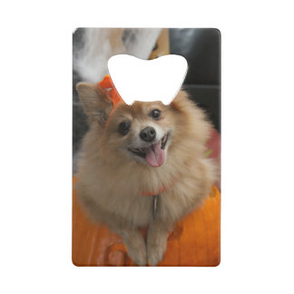 Smiling Foxy Pomeranian Puppy in Pumpkin Halloween