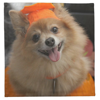 Smiling Foxy Pomeranian Puppy in Pumpkin Halloween Napkin