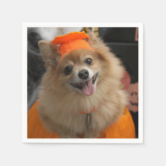 Smiling Foxy Pomeranian Puppy in Pumpkin Halloween Paper Napkins