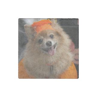 Smiling Foxy Pomeranian Puppy in Pumpkin Halloween Stone Magnet