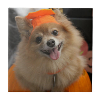 Smiling Foxy Pomeranian Puppy in Pumpkin Halloween Tile