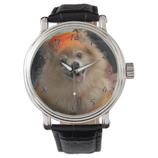 Smiling Foxy Pomeranian Puppy in Pumpkin Halloween Watch