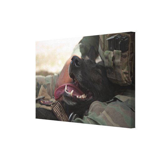 Smiling German Shepherd Military Dog Stretched Canvas Prints