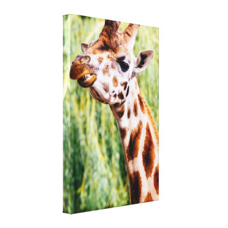 Smiling Giraffe, Funny Animal Photography Gallery Wrapped Canvas