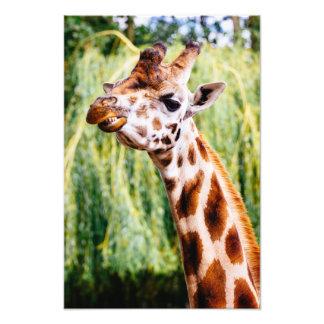 Smiling Giraffe, Funny Animal Photography Photographic Print