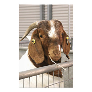 Smiling goat 2 stationery
