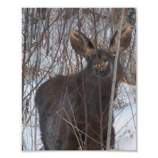 Smiling Moose Art Photo