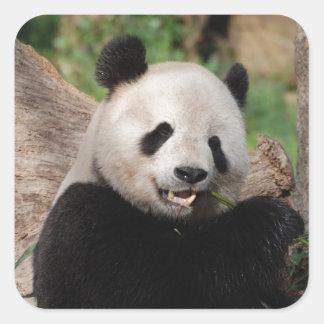 Smiling Panda Bear Square Sticker
