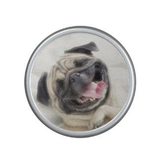 Smiling pug.Funny pug Speaker
